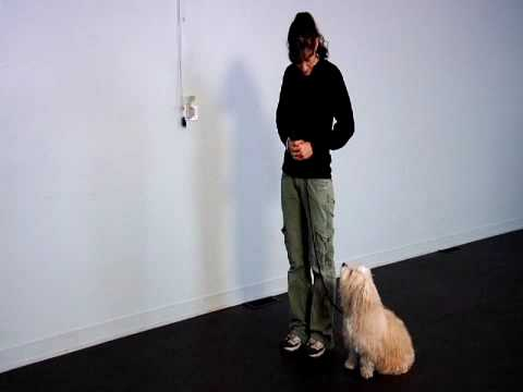 Canine Therapy Corps Certification Test - Small Dog