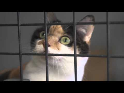 Veterinary Nursing - Rebecca