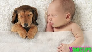 Adorable Babies Sleeping With Dogs Compilation