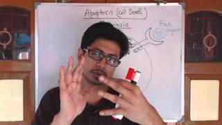 Apoptosis pathway | apoptosis extrinsic pathway