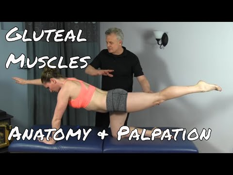 Anatomy & Palpation of the Gluteal Group