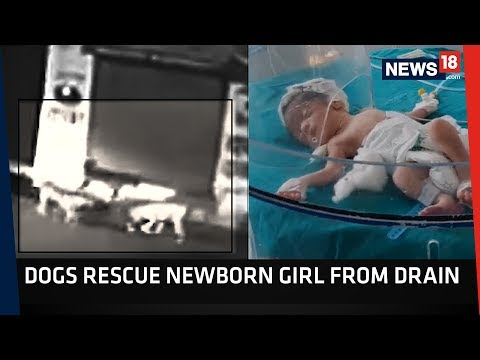 Xxx Mp4 Caught On Camera Woman Throws Newborn Baby Girl In Drain Dogs Rescue Her CRUX 3gp Sex