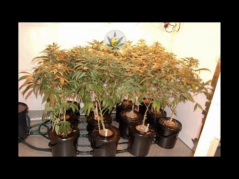 How to Make a Hydroponic DWC Bubbler System
