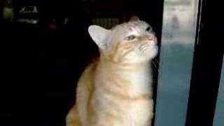 Cat Rubbing Himself on the Window