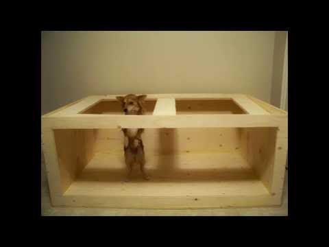 HOW TO: build a Plywood Aquarium TUTORIAL