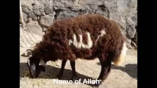Signs to Allah in Nature!!!