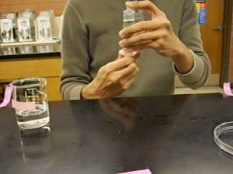 Photosynthesis Lab - How to Sink Discs