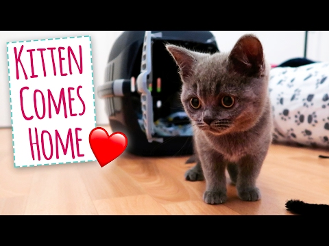 Kitten Comes Home!