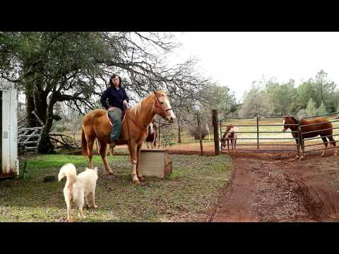 Hysterectomy Recovery Theraputic Horse Ride Part 1