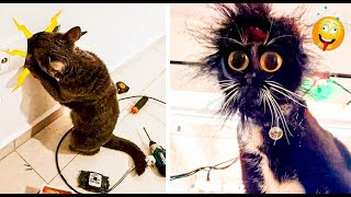 Funny Animals Compilation 😂 - The Best Funny Videos Of Cats And Dogs 🐶😹