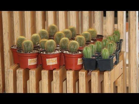¿Te gustan las cactáceas? Conoce el vivero El Viejo Cactus