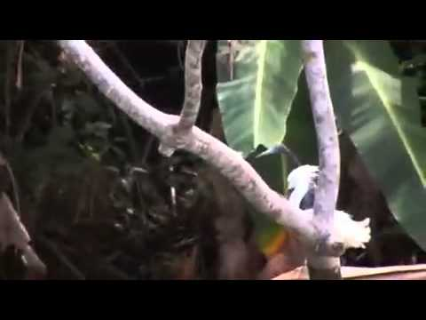 Shore trips in Costa Rica: Limon Highlights