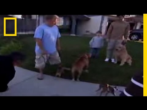 Calm Down! | Dog Whisperer
