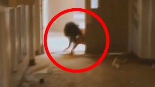 5 Scariest Creatures Caught On Camera & Spotted In Real Life!
