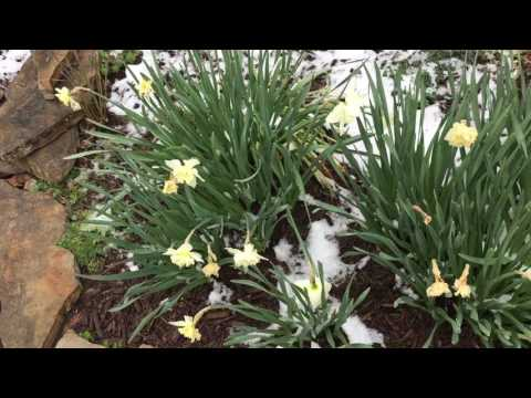 How to keep flowers from dying during freeze??
