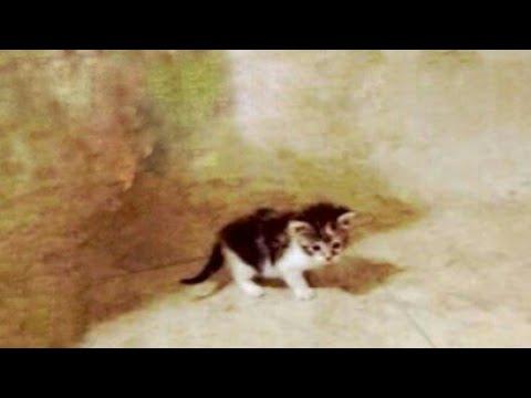 0ne month kitten lost her mommy