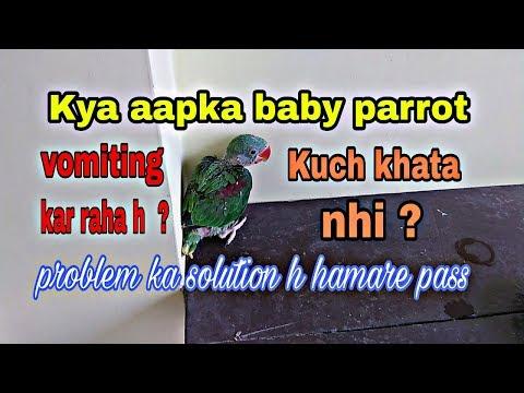 Kya Aapka Baby Parrot Kuch Khata Nhi/Vomiting Kar Raha h In Hindi/Urdu