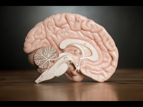 Dementia and Family: What Is Its Effect?