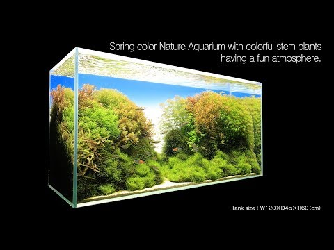 [ADAview] Spring color Nature Aquarium with colorful stem plants having a fun atmosphere