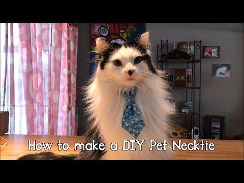 How to make a DIY no sew Pet Necktie