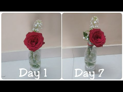 how to keep flowers fresh for longer time | fresh flowers trick