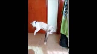 Gato cayendo en camara lenta