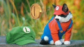 Download Super Mario Cat Bros. Video