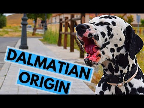 History of the Dalmatian