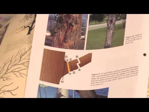 Gardening: Pruning : How to Prune Lemon Trees