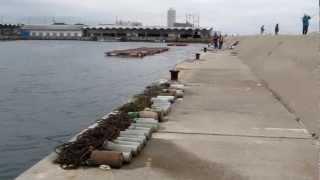 師崎漁港 南堤防 朝一の南側 知多半島 海釣り ポイント 南知多