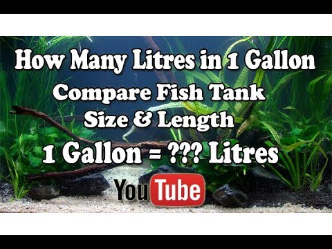 1 Gallon = ??? Litres | How its Compare | Basic Diffference , Measure Volume of Fish Tank !!!!