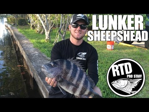 Lunker Sheepshead - Mike O'Gorman