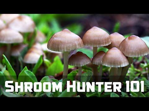 ShroomHunter 101: Identify Wild Magic Mushrooms (Psilocybin)