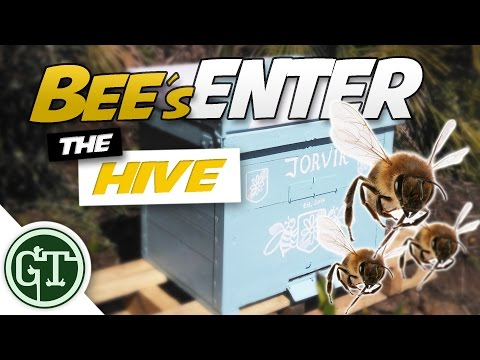 Bees Entering Empty Hive: Has a Swarm Moved In? │ Journey to Beekeeping