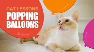 Cat Popping Balloons