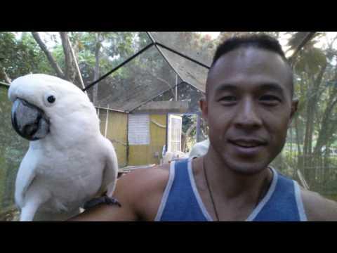 Cockatoo Climbed on Me
