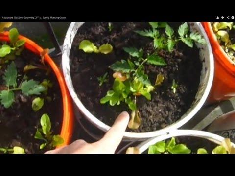 Apartment Balcony Gardening DIY V: Spring Planting Guide
