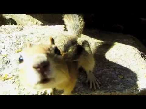 Very Cute Ground Squirrel - Inspiration Point, Grand Teton National Park