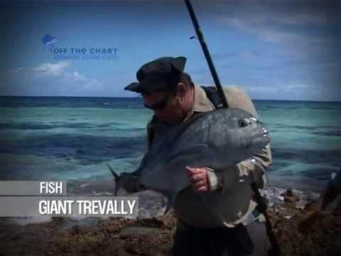 Giant Trevally: Spin Fishing: Seychelles