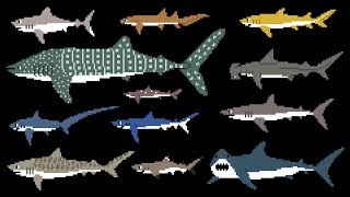 Sharks (8-Bit) - Learn Animals - Great White Shark - The Kids