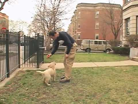 Dog Training Jumping Prevention When Outside