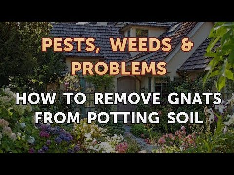 How to Remove Gnats from Potting Soil