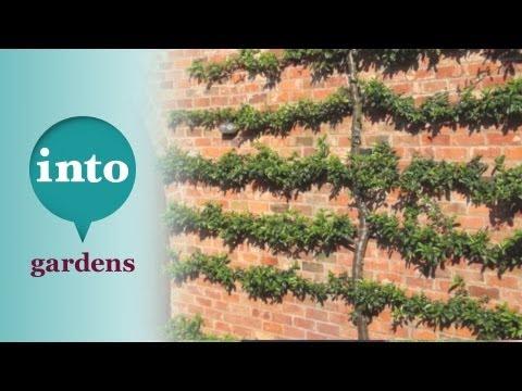 Gardening at Blackpitts: Pruning a Pyracantha