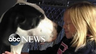 Young Girl's Special Bond With Her Service Dog George