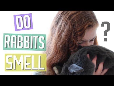 Do Rabbits Smell?