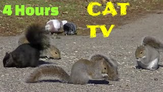 Entertainment Videos For Cats and Dogs To Watch,