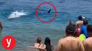 כריש מפתיע את הרוחצים בחוף באילת