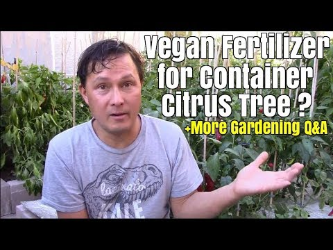 Vegan Fertilizer for Container Citrus Tree + Your Gardening Questions Answered