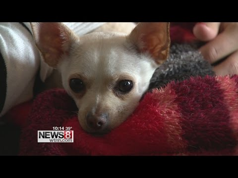 Dog electrocuted after chewing on Christmas lights