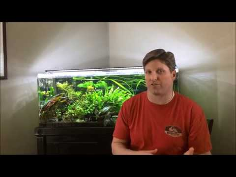 My Experience with CO2 and planted aquariums